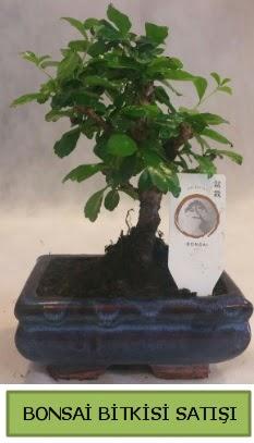 Bonsai ithal görsel minyatür japon ağacı  Eskişehir ucuz çiçek gönder