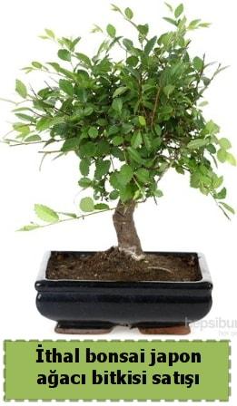 İthal bonsai saksı çiçeği Japon ağacı satışı  Eskişehir İnternetten çiçek siparişi