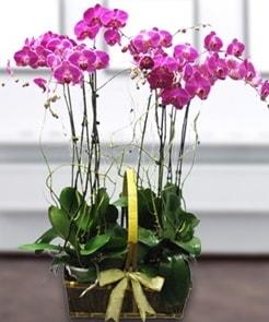 7 dallı mor lila orkide  Eskişehir çiçek gönderme sitemiz güvenlidir