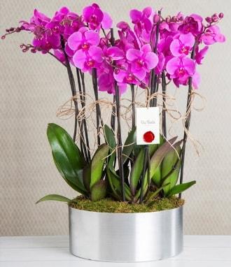 11 dallı mor orkide metal vazoda  Eskişehir çiçek gönderme sitemiz güvenlidir