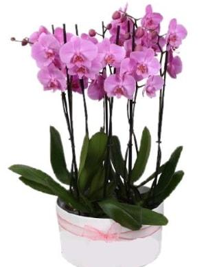 Beyaz seramik içerisinde 7 dallı mor orkide  Eskişehir çiçekçi telefonları