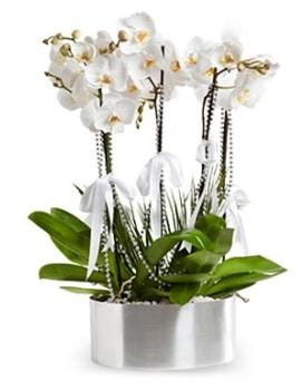 Beş dallı metal saksıda beyaz orkide  Eskişehir çiçek yolla