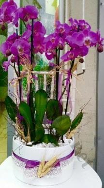 Seramik vazoda 4 dallı mor lila orkide  Eskişehir online çiçek gönderme sipariş