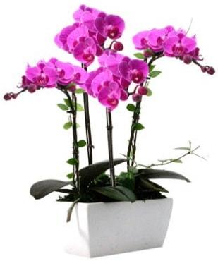 Seramik vazo içerisinde 4 dallı mor orkide  Eskişehir çiçek satışı