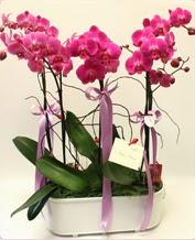 Beyaz seramik içerisinde 4 dallı orkide  Eskişehir ucuz çiçek gönder