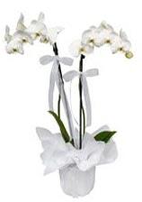 2 dallı beyaz orkide  Eskişehir güvenli kaliteli hızlı çiçek