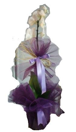 Tek dallı beyaz orkide süper kalite ithal  Eskişehir çiçek siparişi sitesi