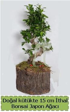 Doğal kütükte İthal bonsai japon ağacı  Eskişehir çiçek gönderme