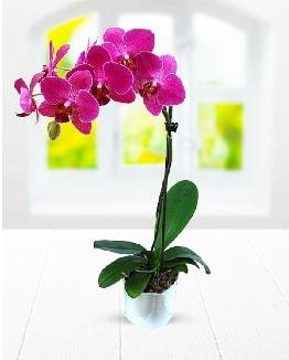 Tek dallı mor orkide  Eskişehir çiçek satışı