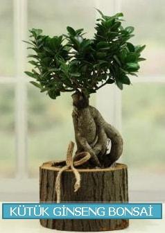 Kütük ağaç içerisinde ginseng bonsai  Eskişehir çiçek gönderme sitemiz güvenlidir