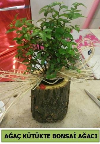 Doğal ağaç kütük içerisinde bonsai ağacı  Eskişehir çiçek gönderme sitemiz güvenlidir