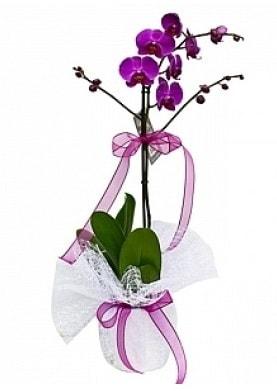 Tekli Mor Orkide  Eskişehir çiçek yolla