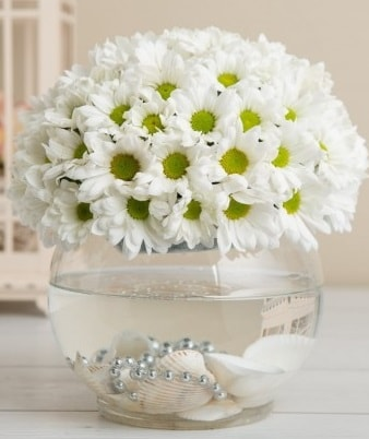 Fanusta beyaz Papatya  Eskişehir çiçek satışı
