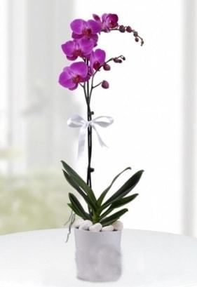 Tek dallı saksıda mor orkide çiçeği  Eskişehir çiçekçiler