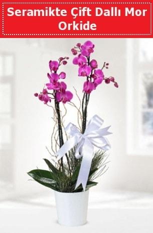 Seramikte Çift Dallı Mor Orkide  Eskişehir anneler günü çiçek yolla
