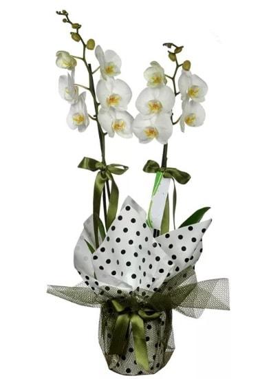 Çift Dallı Beyaz Orkide  Eskişehir 14 şubat sevgililer günü çiçek