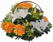 Eskişehir online çiçekçi , çiçek siparişi  sepet modeli Gerbera kazablanka sepet